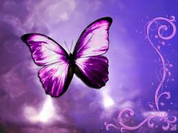 Butterfly purple
